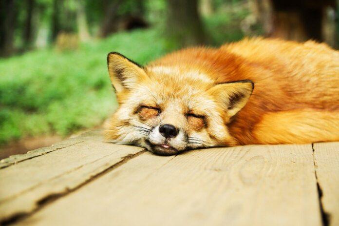 Uyku Düzeninde Bozulma Bakım Planı
